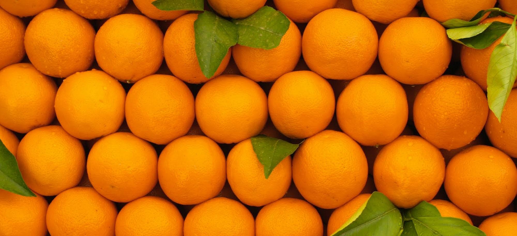 vera arancia calabrese bio biologiche biologico tarocco navel novelino novellino gallo GAS gruppo di acquisto solidale grillo verde calabria